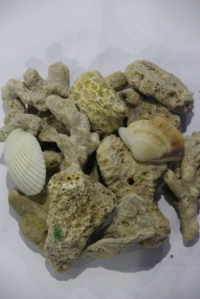 crush coral sand 45-70mm 15kg