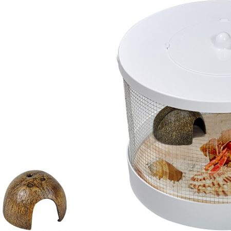 hermit crab kit